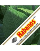 Colección Habanos